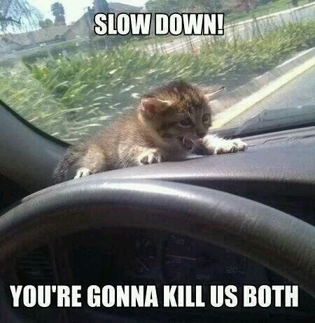 Going too fast cat - meme