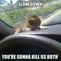 Going too fast cat