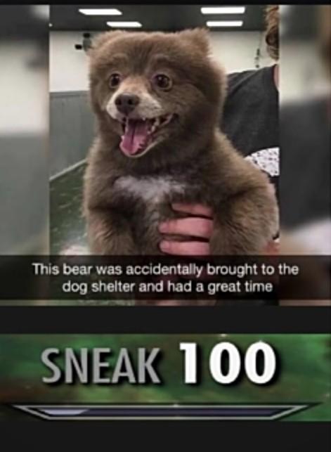 Bear doggo - meme