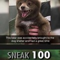 Bear doggo