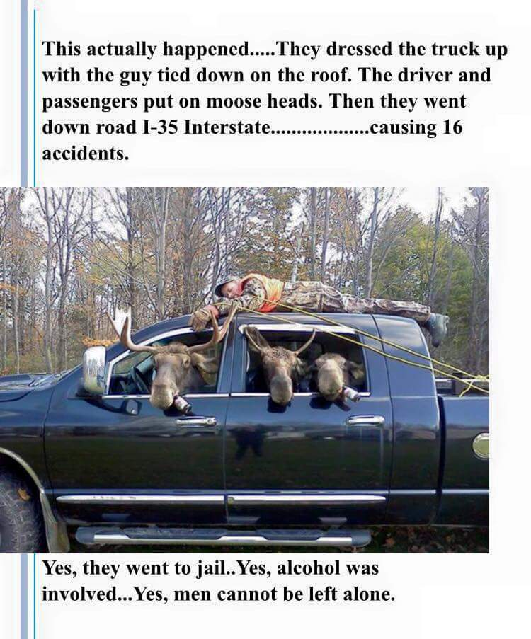 Deer God they Moose be out of their minds - meme