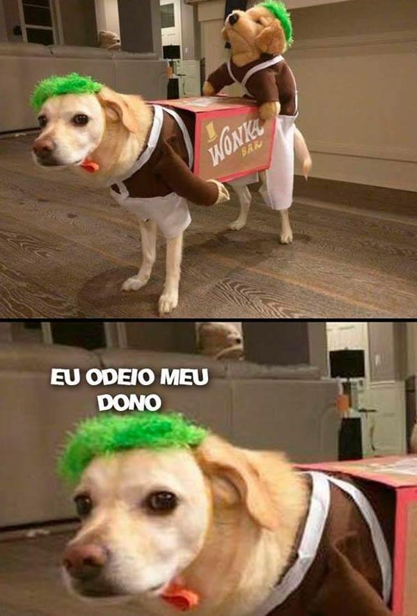 MALDITO DONO - meme