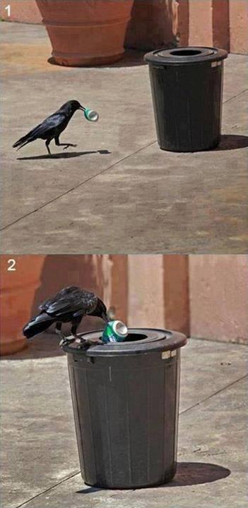 """Brincadeira hein até pássaro é mais educado do nós """"pessoas"""". - meme"""