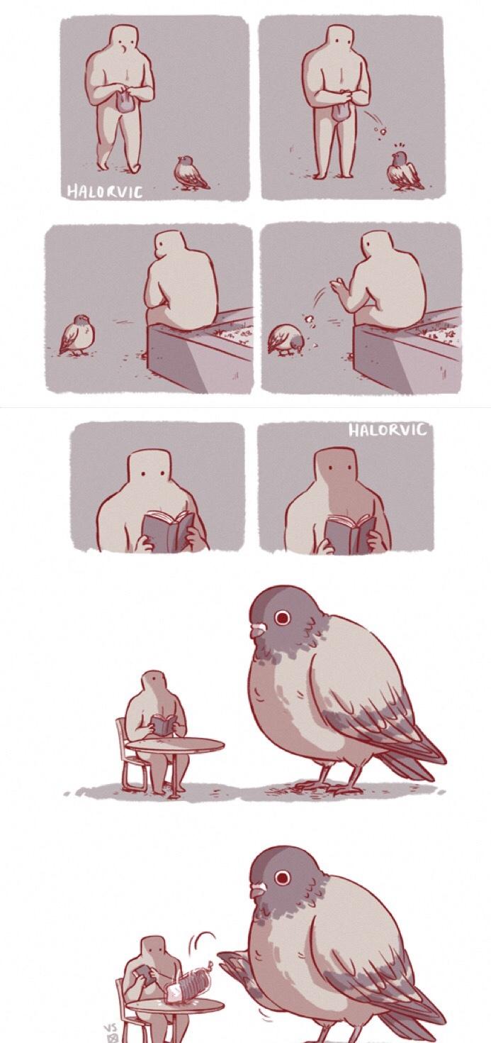 I like pigeons, they're like flying racoons. - meme