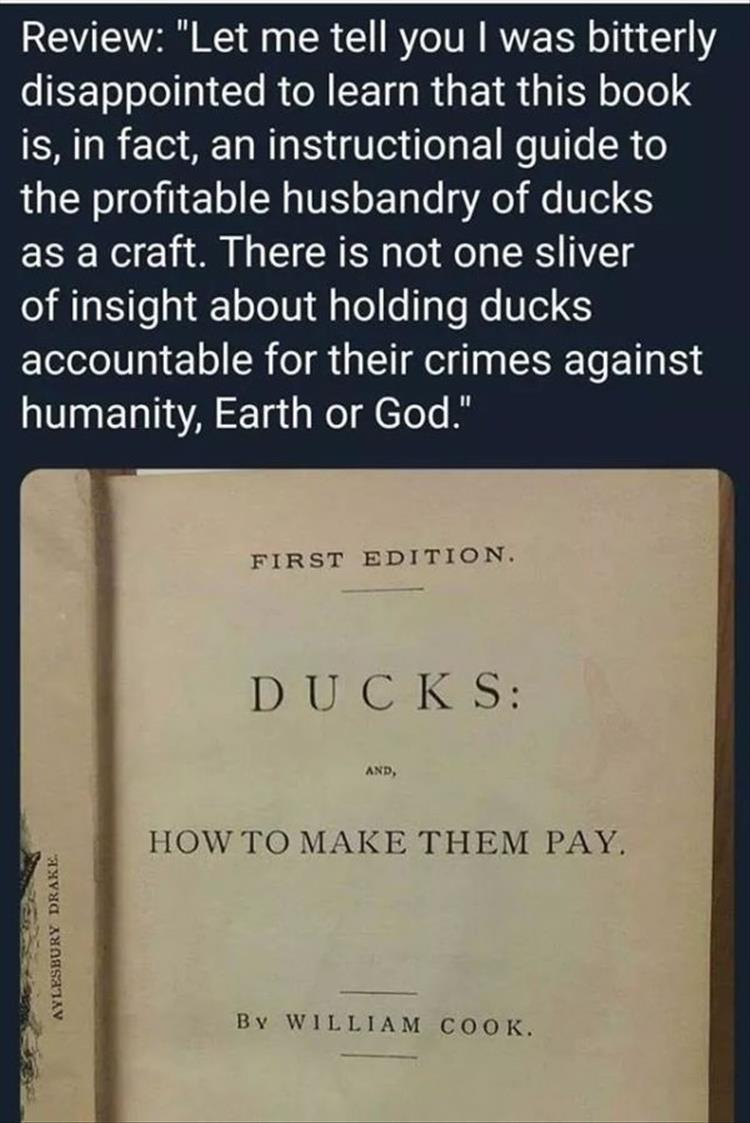 Lousy ducks gotta pay - meme