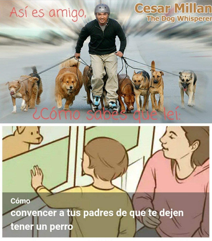 Perros :) - meme
