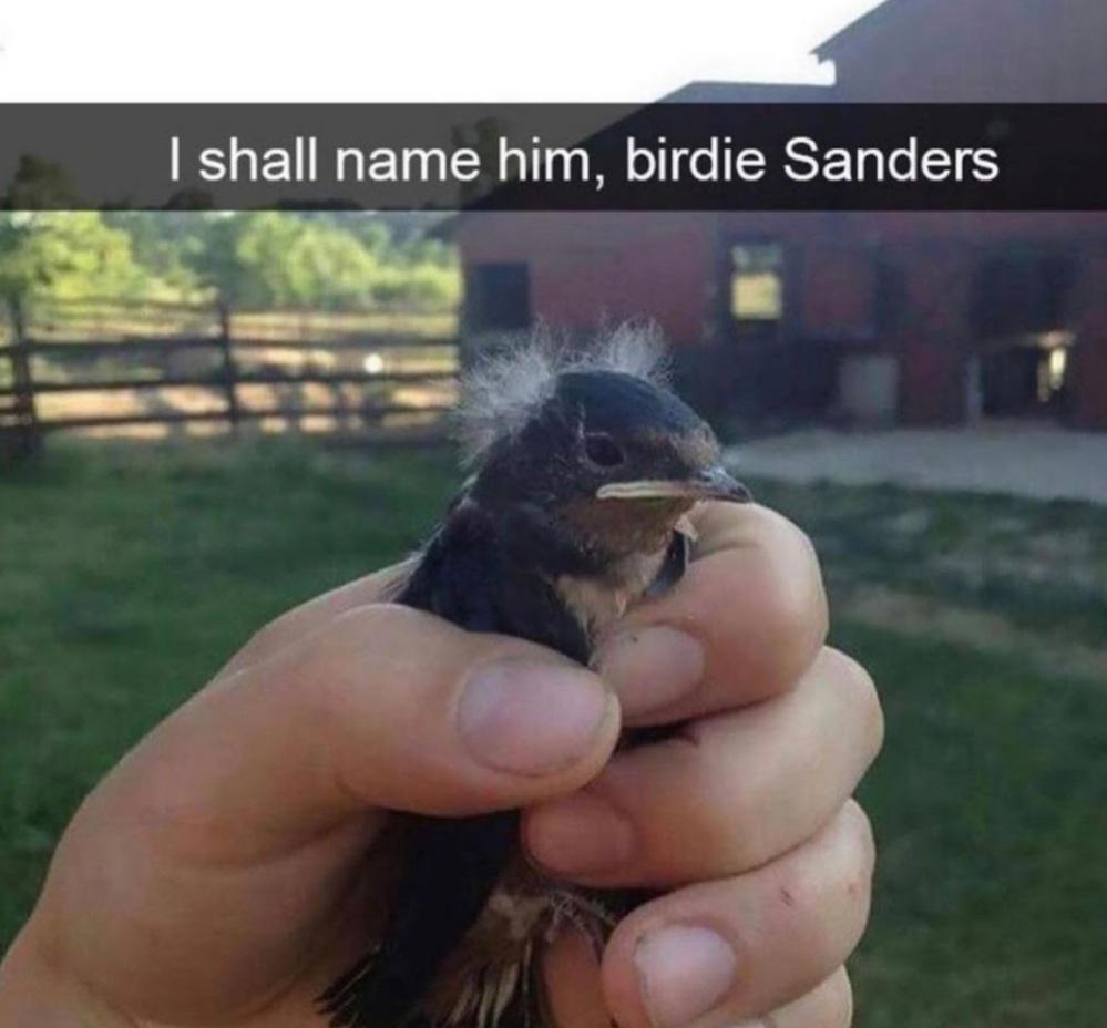 BIRDIE SANDERS - meme