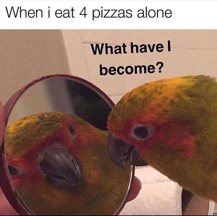 eating four pizzas turns you into a bird - meme