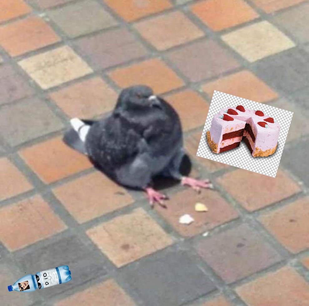 No paloma donde te estas centando NOOOO - meme