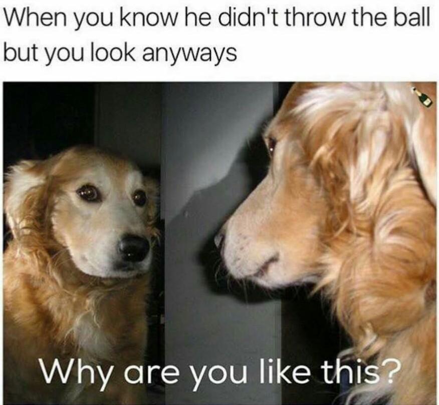Doggo=lyf - meme