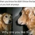 Doggo=lyf