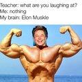 Elon Muskle