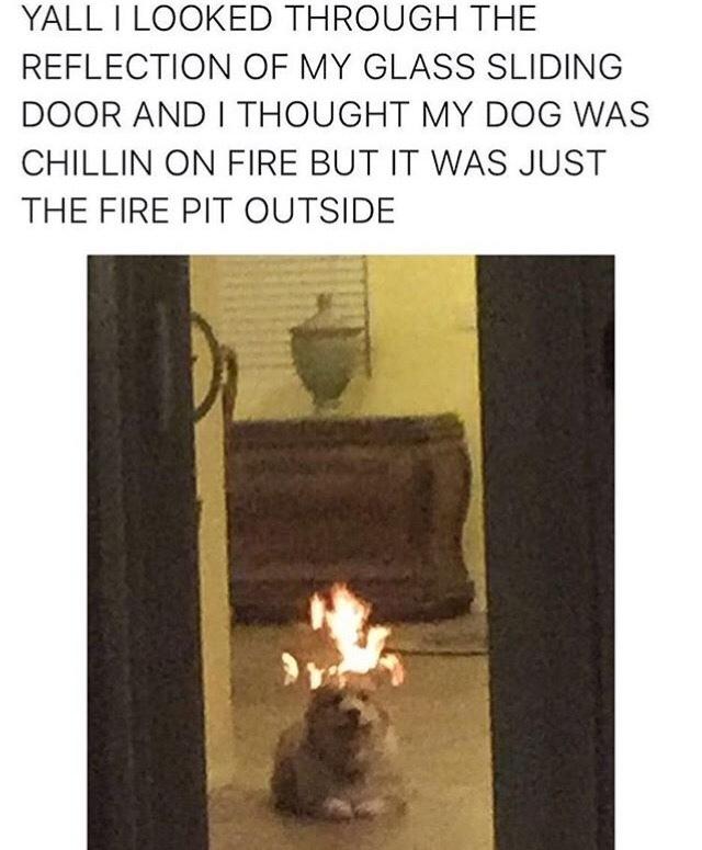 doggo is happy to burn - meme