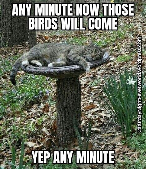 Cat waiting a long time for birds - meme