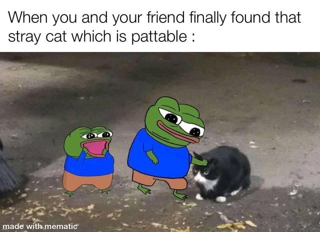 When you and your friend finally found that stray cat which is pattable - meme