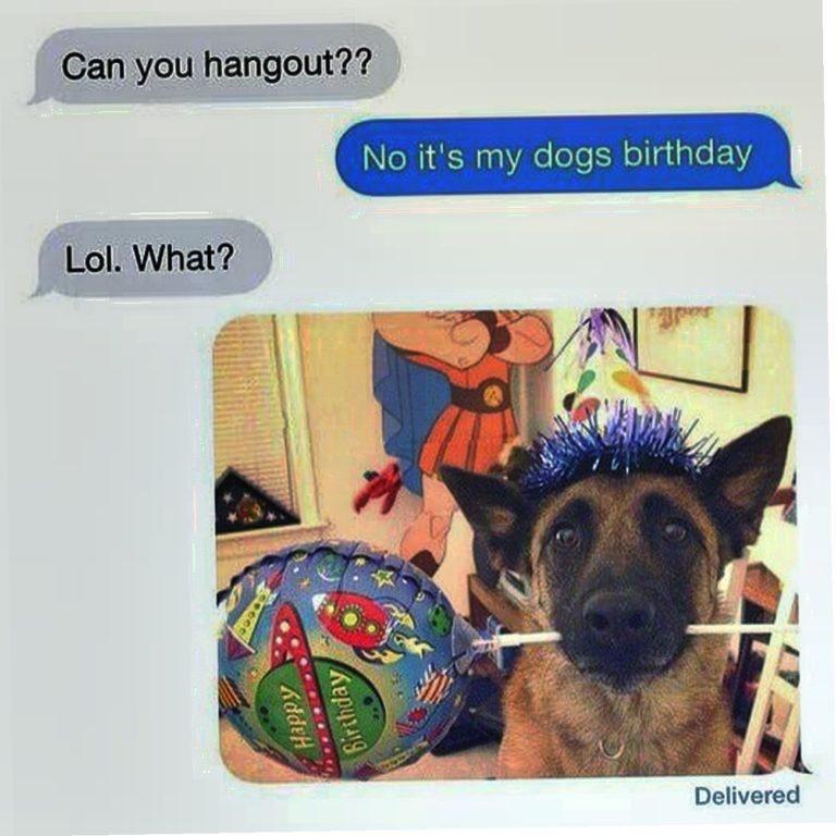 it's my dogs birthday - meme