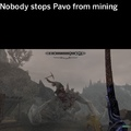 don't mess with Pavo