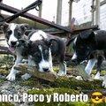 Franco, Paco y Roberto