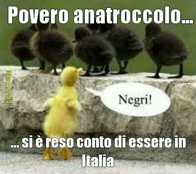 Negri in italia - meme