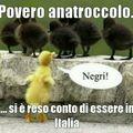 Negri in italia