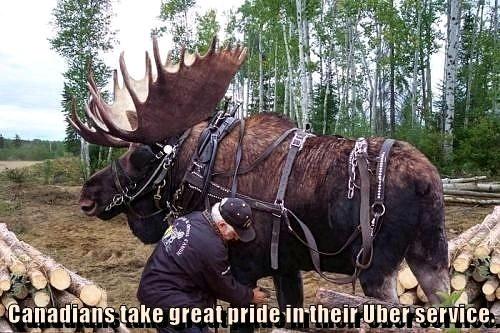 Uber canada - meme