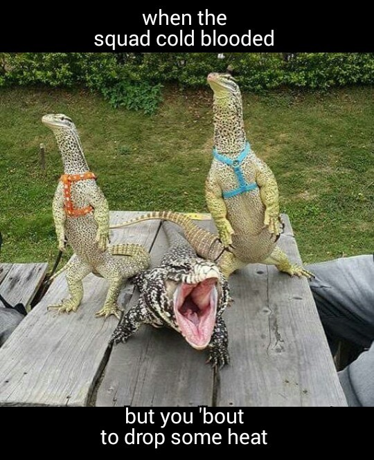 I love monitor lizards - meme