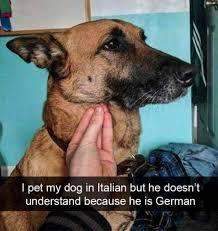 puppy - meme