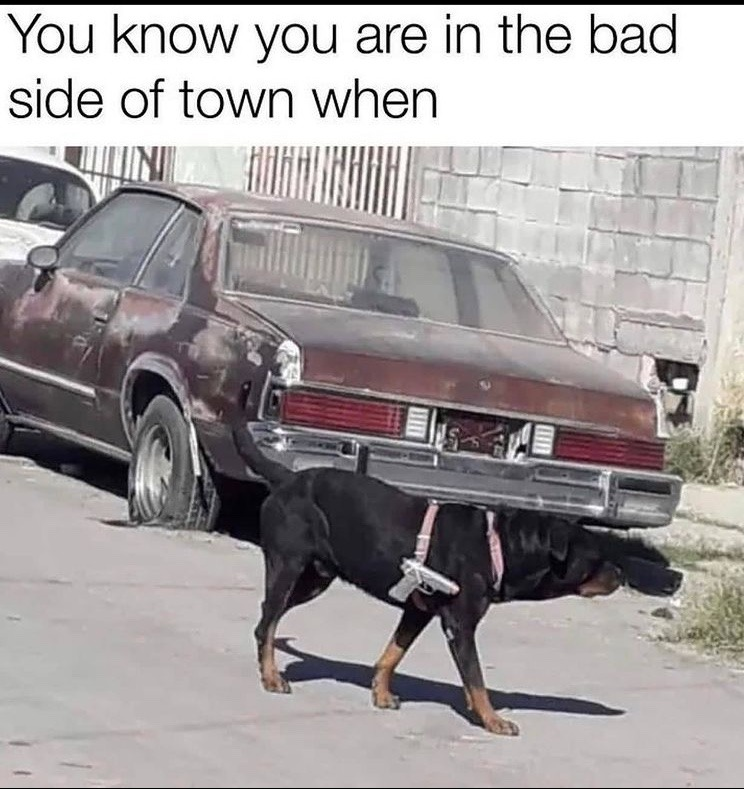 dog is packing - meme