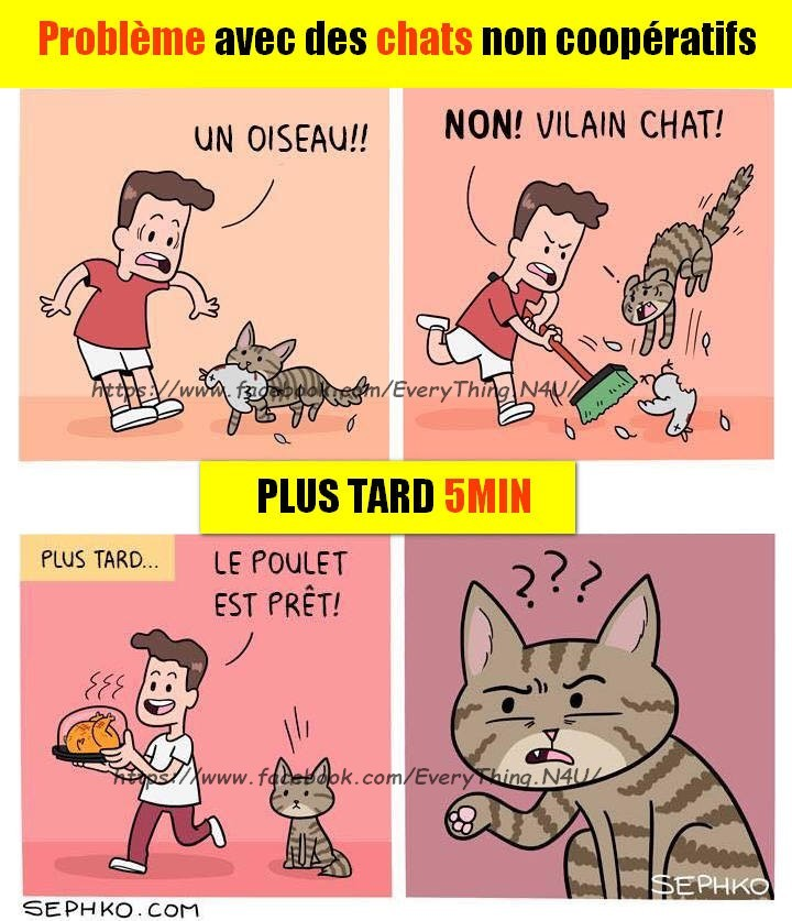 Problème avec des chats non coopératifs - meme