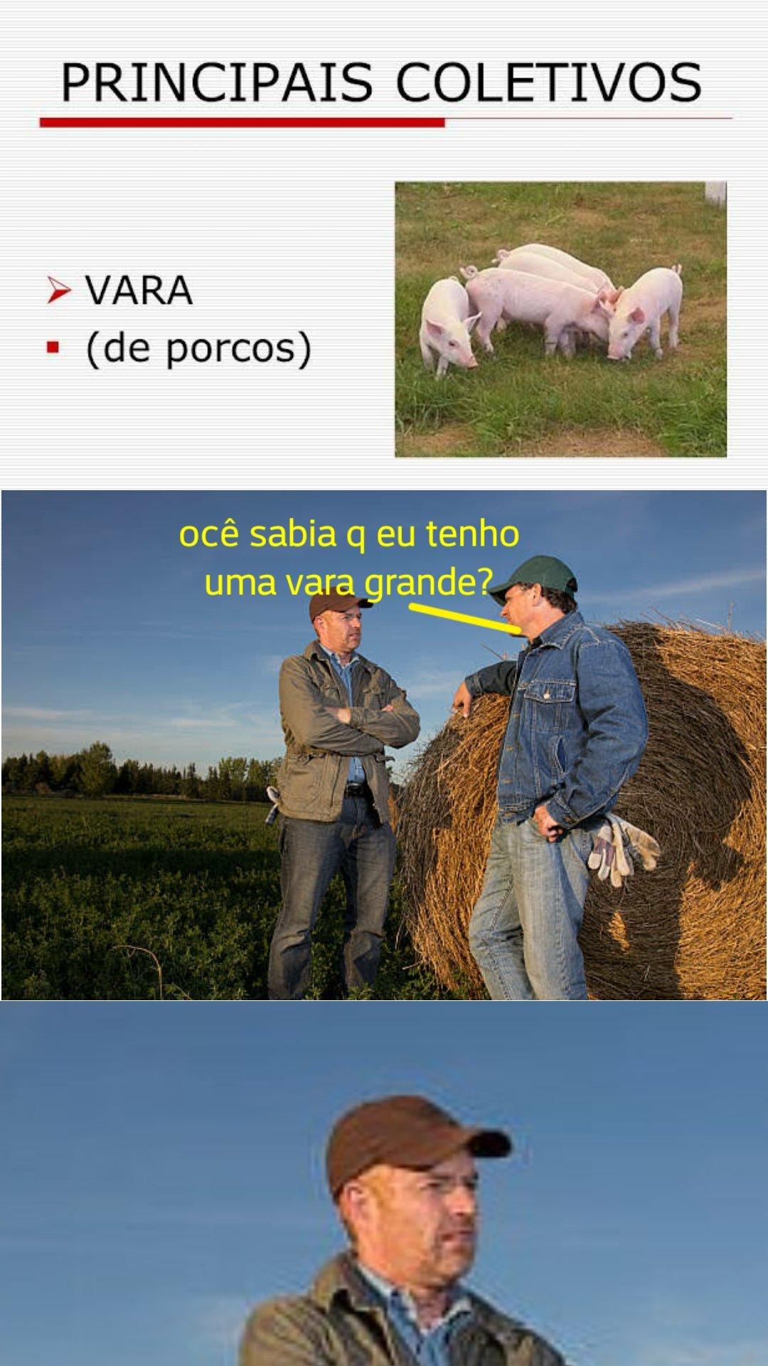 Muitos porcos - meme