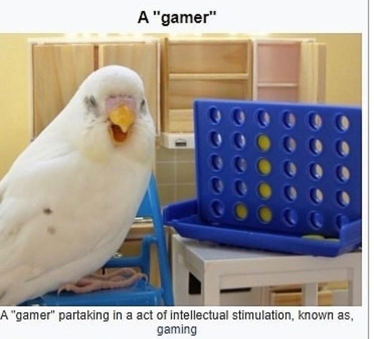 gamer birb - meme
