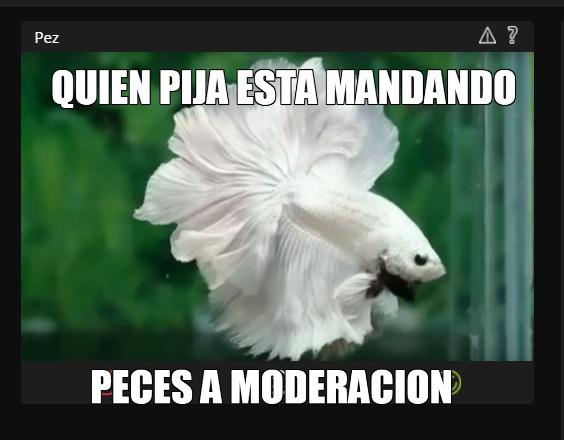Atencion a todos los mods estan mandandos imagenes de peces a moderacion - meme