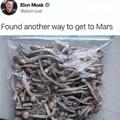 Elon making strides like a boss