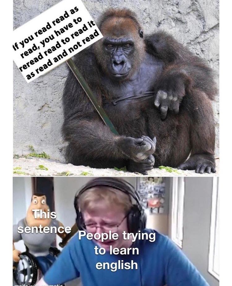 reread - meme