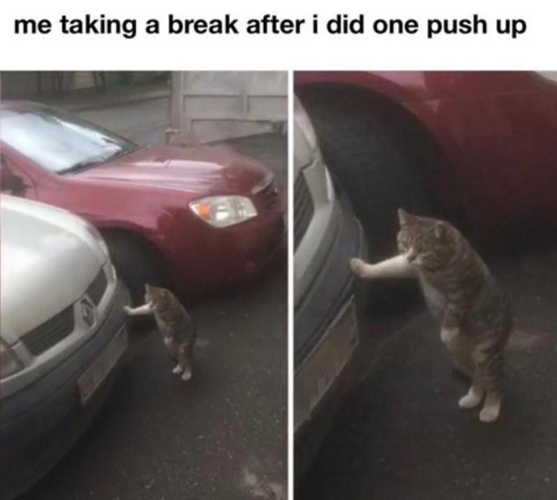 Phat cat - meme