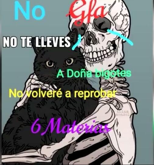 No te metas con el gato el no tiene la culpa - meme