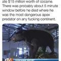 Eu queria ser esse urso