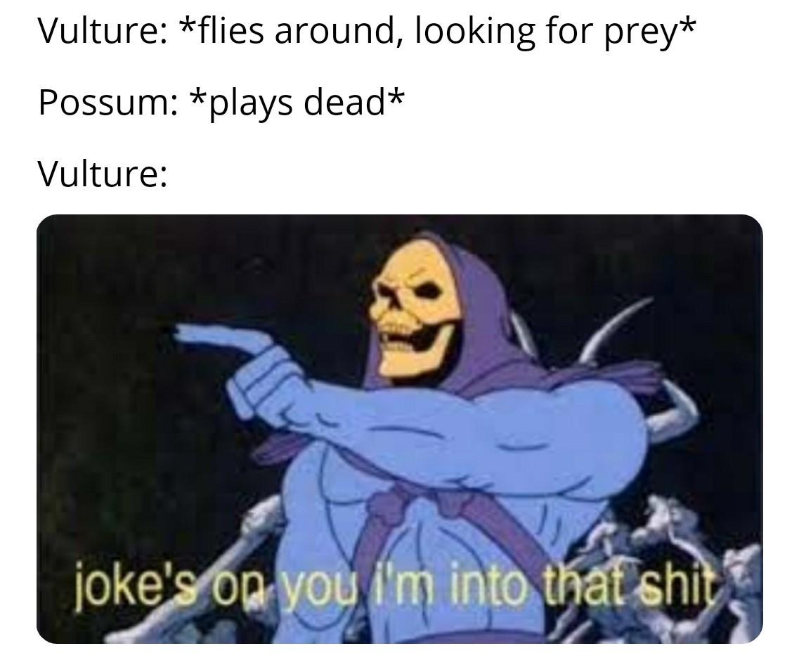 Possum - meme