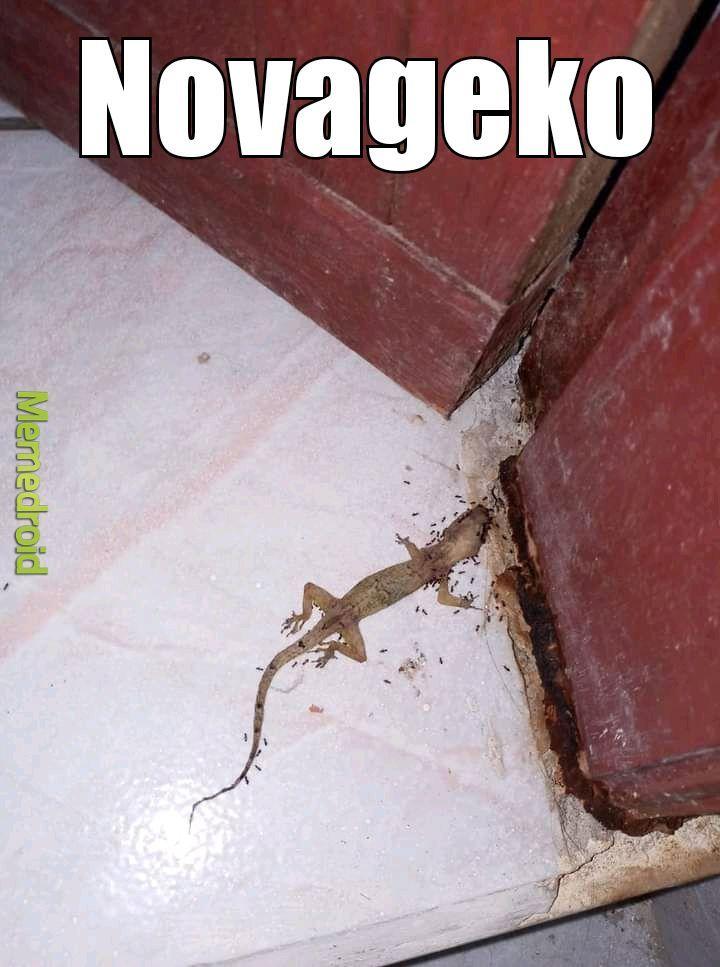 Novageko - meme