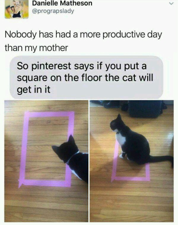 A cat will sit in a rectangle or square - meme