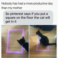 A cat will sit in a rectangle or square