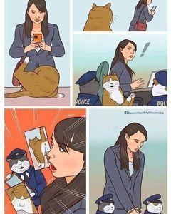 normalicen el acoso a gatos (si no la pongo con un furro con esto no la pongo con nada) - meme