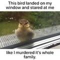 I didn't do it bird