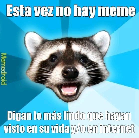 El mapache del meme está viendo cosas lindas.