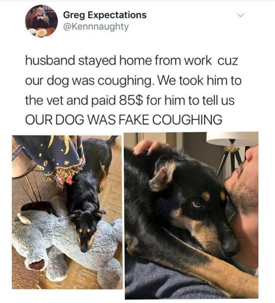 Doggos are life - meme