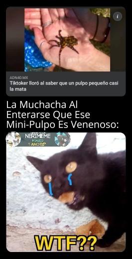 Meme: Mini Pulpo Venenoso