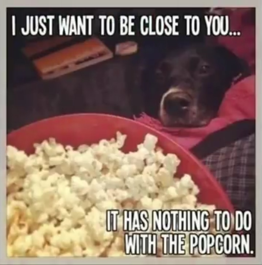 Watching a movie with doggie be like - meme