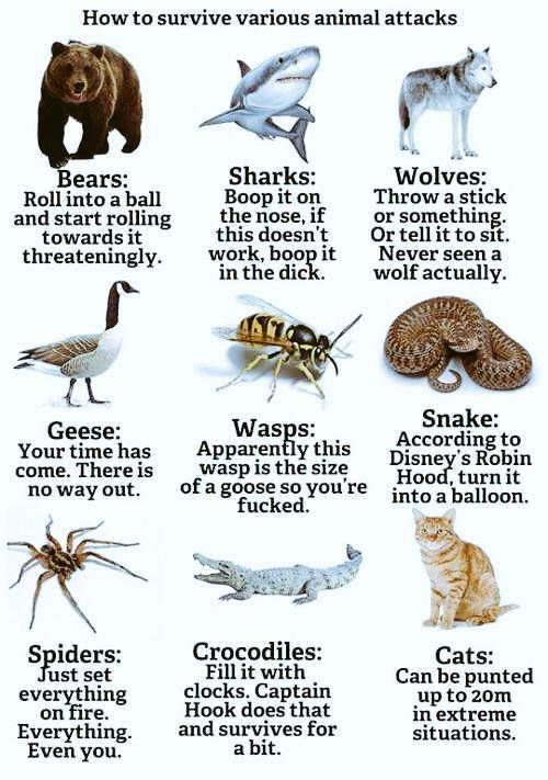 Animal survival guide. - meme