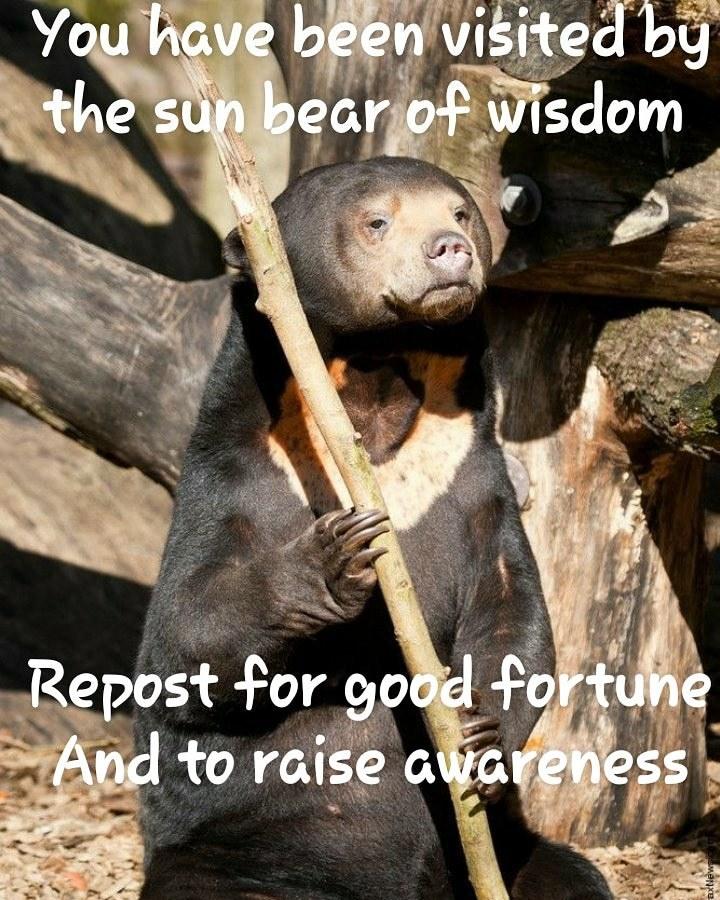 The sun bear of wisdom - meme