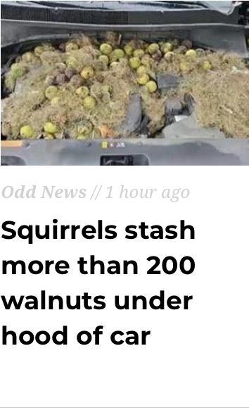 Hood Nuts - meme